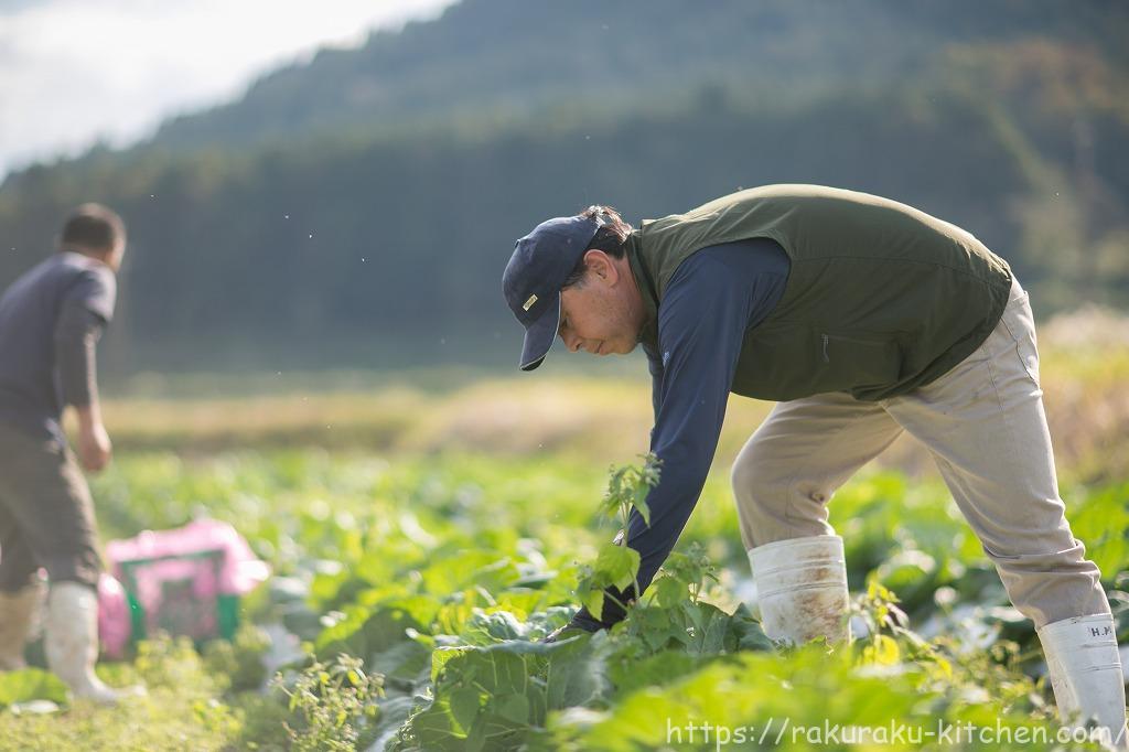 秋川牧園 無農薬栽培